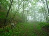 白樺峠旧道(たぶん)