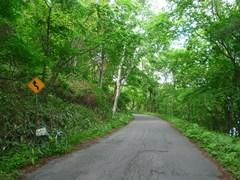 小沼北岸の道