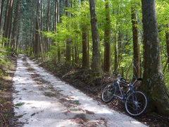 柴石峠への道