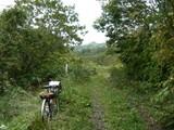 草生い茂る道