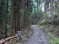林道に出た