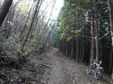 林道を登る