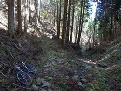 伐採林道分岐