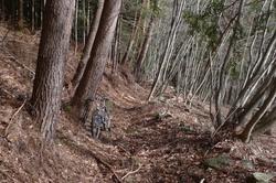 淵坂峠への径