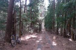 淵坂峠への車道