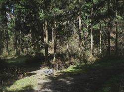 林道と旧道?の分岐
